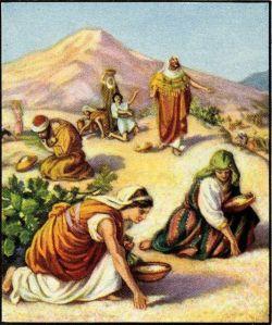 manna from heaven - exodus
